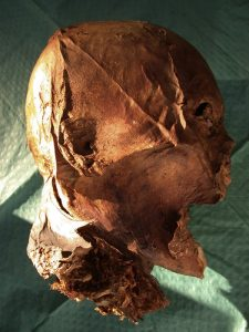 Mummified head supposedly of Henry IV