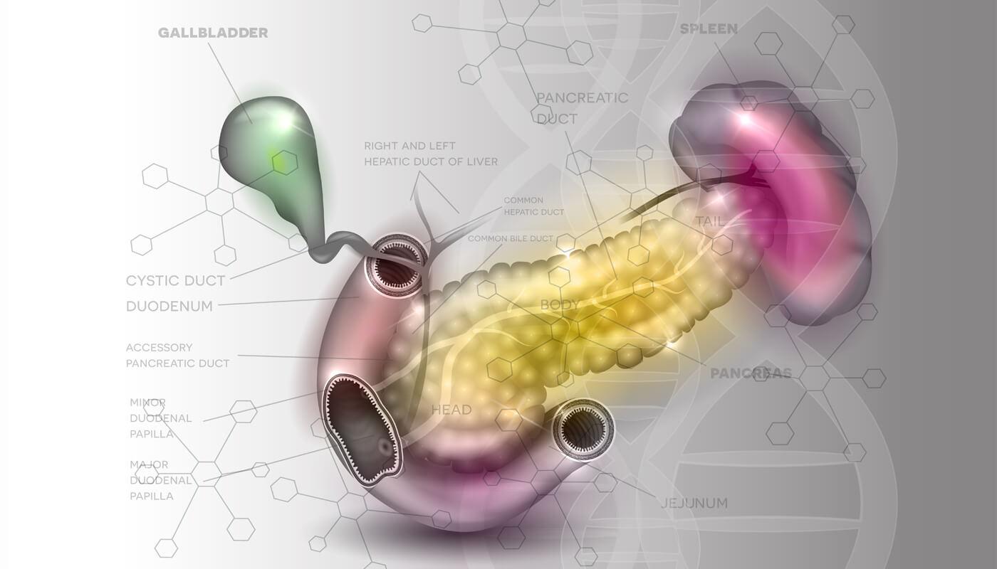 diagram of a pancreas