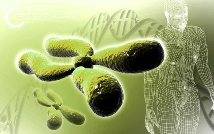 stylized image of a chromosome