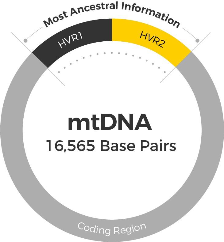 mtDNA regions