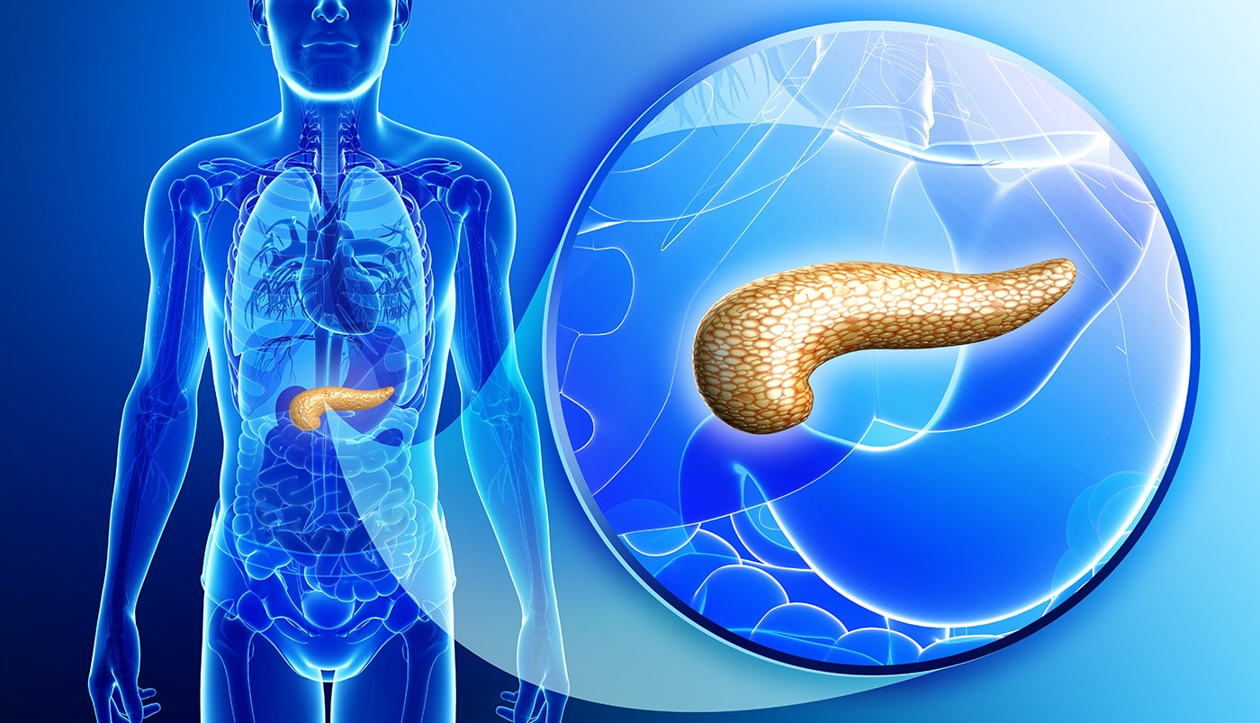 Prox1 Genotype Affects The Size Of Your Pancreas Did You Know Dna