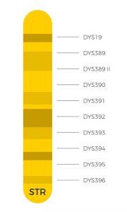 Y-DNA STR markers